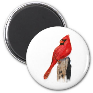Cardinal on Post Magnet