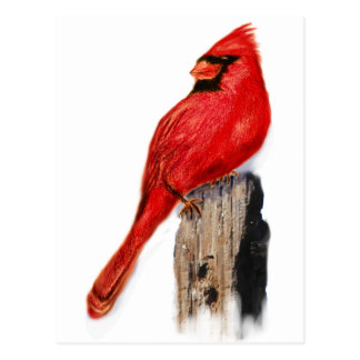 Cardinal on Post Postcard