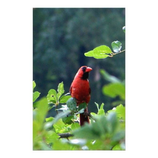 Cardinal on Uncle Seth's Pond, Orleans, MA Personalized Stationery