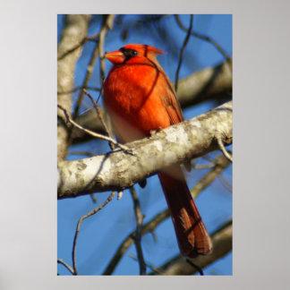 Cardinal Ornithology Posters