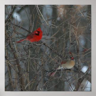 Cardinal Pair Posters