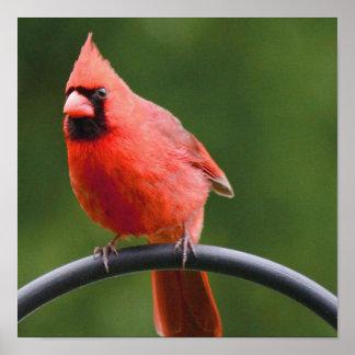 Cardinal Posters