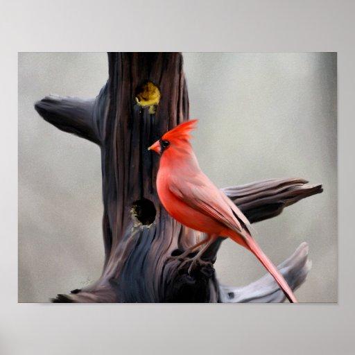 Cardinal Poster 14x11