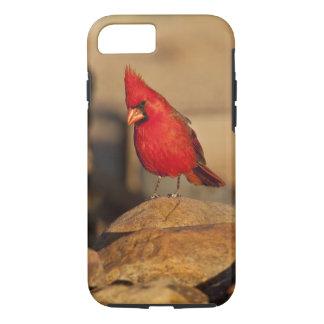 Cardinal, Richmondena cardinalis, South Eastern iPhone 7 Case