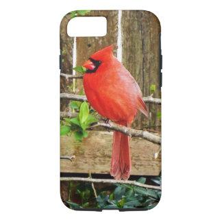 Cardinal spring  iPhone case