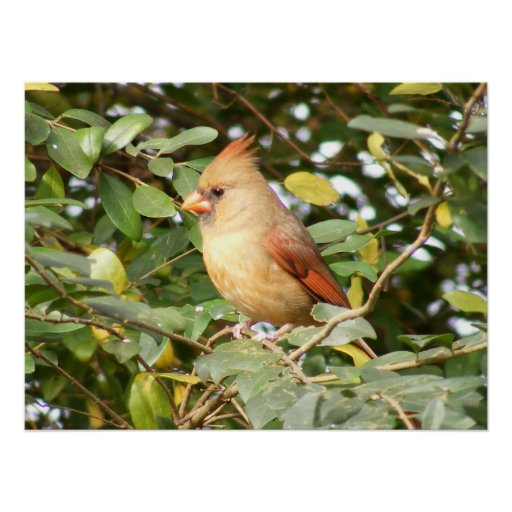 Cardinal Sweetness Poster