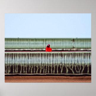 Cardinal View Poster