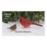 Cardinal with Sparrow Business Cards
