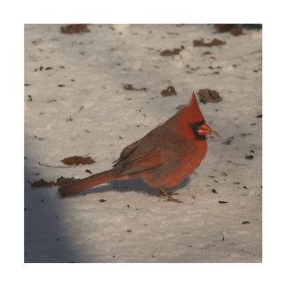 Cardinal, Wood Photo Print. Wood Canvas