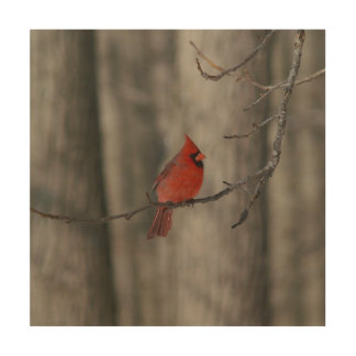 Cardinal, Wood Photo Print. Wood Canvases
