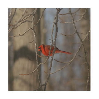 Cardinal, Wood Photo Print. Wood Prints