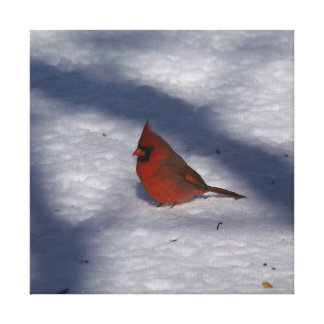 Cardinal, Wrapped Canvas Print.
