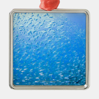 Cardinalfishes swimming underwater christmas ornament