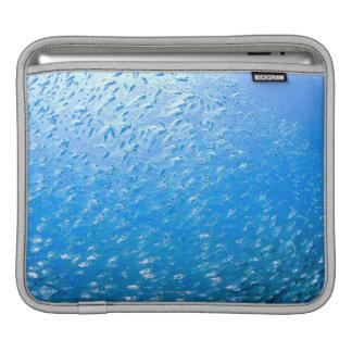 Cardinalfishes swimming underwater iPad sleeve