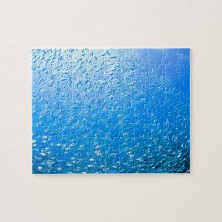Cardinalfishes swimming underwater jigsaw puzzle