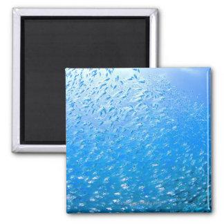 Cardinalfishes swimming underwater magnet