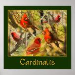 Cardinalis - POSTER - Collage of Cardinals