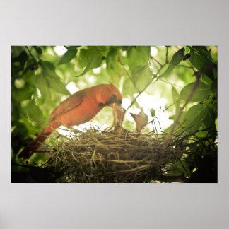 Cardinals Feeding Poster