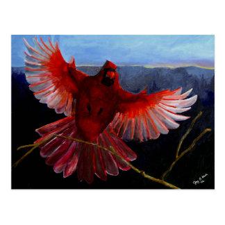 Cardinal's Glory Postcard