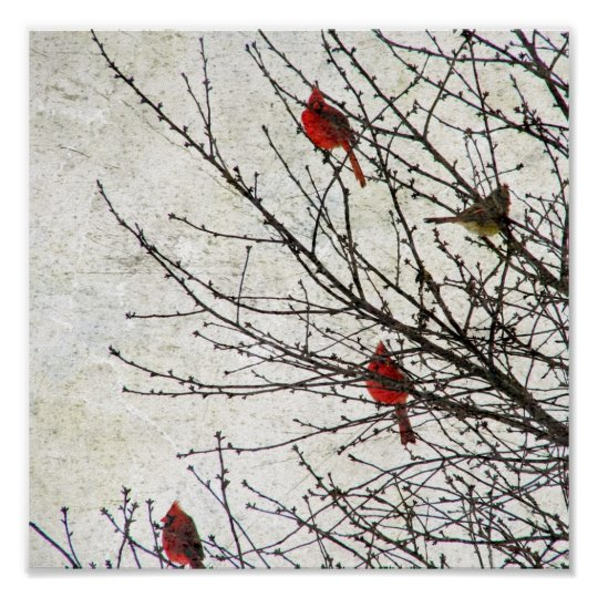 Cardinals in a Tree Grunge Poster