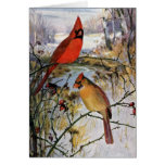Cardinals in Winter Card