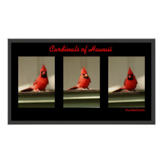 Cardinals Of Hawaii Poster