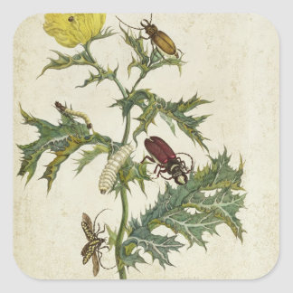 Cardos Spinosus: Beetles and Caterpillars, plate 6 Square Sticker