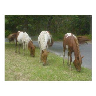 Carefree Ponies Postcard