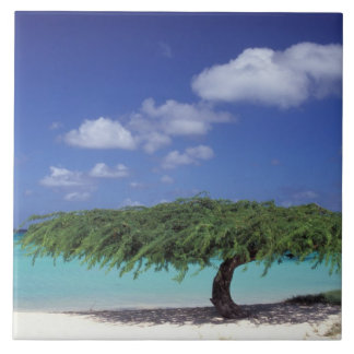Caribbean, Aruba. Eagle Beach Large Square Tile