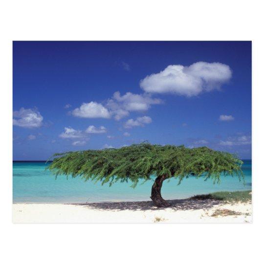 Caribbean, Aruba. Eagle Beach Postcard