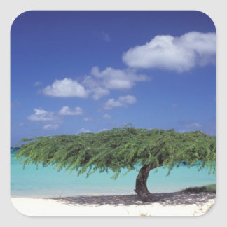 Caribbean, Aruba. Eagle Beach Square Sticker