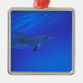 Caribbean Bahamas Spotted dolphin Christmas Ornaments
