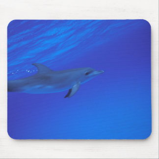Caribbean, Bahamas Spotted dolphin Mouse Mat