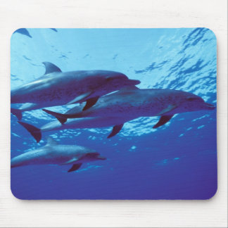 Caribbean, Bahamas Spotted dolphins Mouse Mat