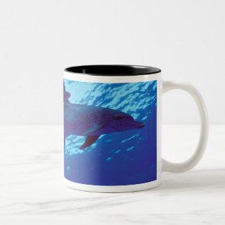 Caribbean, Bahamas Spotted dolphins Two-Tone Coffee Mug