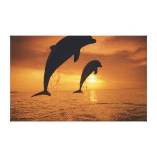 Caribbean, Bottlenose Dolphin Canvas Print