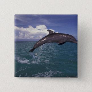Caribbean, Bottlenose dolphin Tursiops 2 15 Cm Square Badge