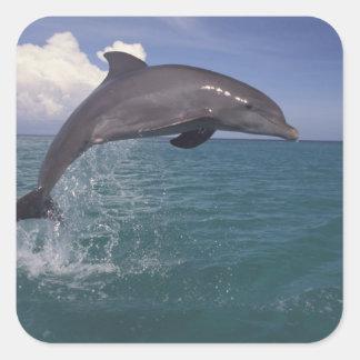 Caribbean, Bottlenose dolphin Tursiops 3 Square Sticker