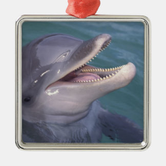 Caribbean, Bottlenose dolphin Tursiops 4 Silver-Colored Square Decoration