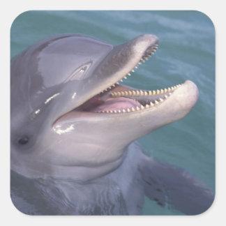 Caribbean, Bottlenose dolphin Tursiops 4 Square Sticker