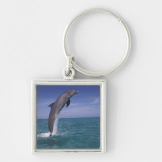 Caribbean, Bottlenose dolphin Tursiops Silver-Colored Square Key Ring