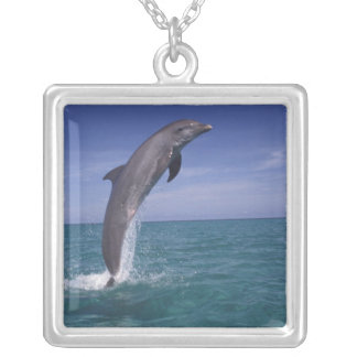 Caribbean, Bottlenose dolphin Tursiops Silver Plated Necklace