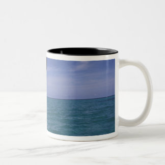 Caribbean, Bottlenose dolphin Tursiops Two-Tone Coffee Mug