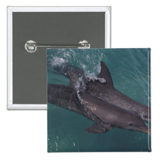 Caribbean, Bottlenose dolphins Tursiops 10 15 Cm Square Badge