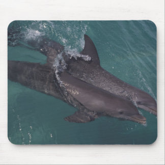 Caribbean, Bottlenose dolphins Tursiops 10 Mouse Mat
