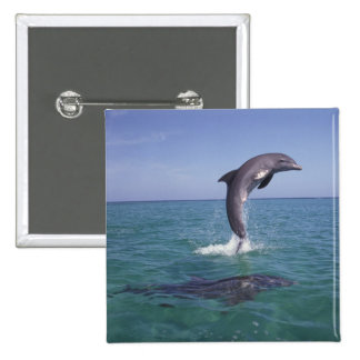 Caribbean, Bottlenose dolphins Tursiops 11 15 Cm Square Badge