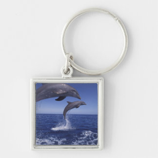 Caribbean, Bottlenose dolphins Tursiops 12 Keychains