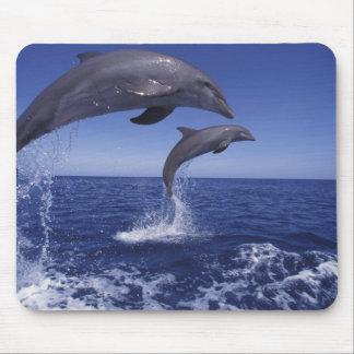 Caribbean, Bottlenose dolphins Tursiops 12 Mouse Mat