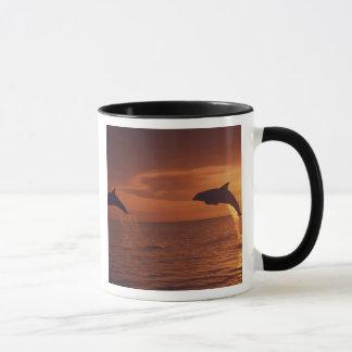 Caribbean, Bottlenose dolphins Tursiops 14 Mug