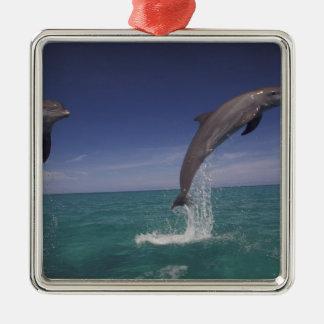 Caribbean, Bottlenose dolphins Tursiops 15 Christmas Ornament